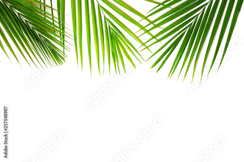 Tuinposter Palm boom Tropical green palm leaves on white background. Minimal nature summer concept. Top view, flat lay, copy space. Isolated