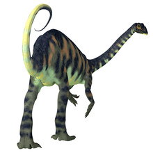 Massospondylus Dinosaur Tail - Massospondylus Was A Herbivorous Prosauropod Dinosaur That Lived In South Africa During The Jurassic Period.