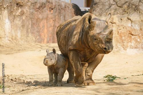 Aluminium Prints Rhino クロサイの親子
