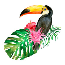 Watercolor Portrait Of Toucan ...