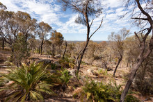 Dry Australian Bush Under A Blue Sky With White Clouds