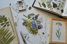 Composition Of Dried Flowers