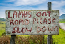 Sign: Lambs On Road Please Slo...