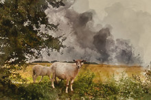 Watercolour Painting Of Farm Sheep In Landscape On Stormy Summer Day