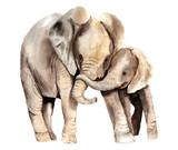 Fototapeta Fototapety na ścianę do pokoju dziecięcego - watercolor animals - african elephant with a kid
