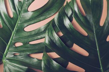 Duże liście monstery. Tropikalne tło w modnym stylu płaskiego layu w żywych kolorach holograficznych gradientu. Pop Art. Naturalne modne tło.