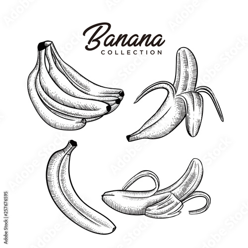 Foto banana collection  hand drawn style