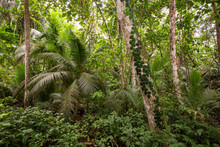 In The Tropical Forest Of Cost...