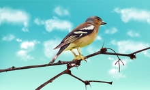 Beautiful Sparrow On A Branch Vector. Spring Card. Blue Sky Backgrounds