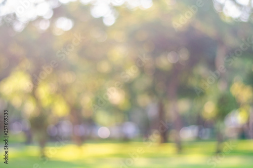 Fotomural  blur green bokeh lush garden park outdoor in nature abstract background