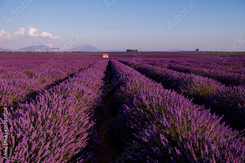 Printed kitchen splashbacks Cappuccino stone house at lavender field