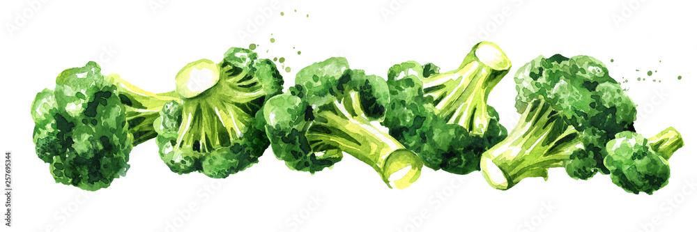 Fototapety, obrazy: Fresh broccoli. Hand drawn horizontal watercolor illustration, isolated on white background
