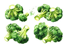 Fresh Broccoli Set. Hand Drawn Watercolor Illustration, Isolated On White Background