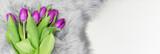 Fototapeta Kwiaty - Tulipany baner