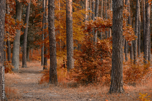 Poster Marron chocolat Fantasy autumn pine tree forest with mysterious trail