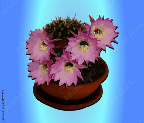 Photo  pianta grassa  Echinopsis oxygona Echinopsismultiplex