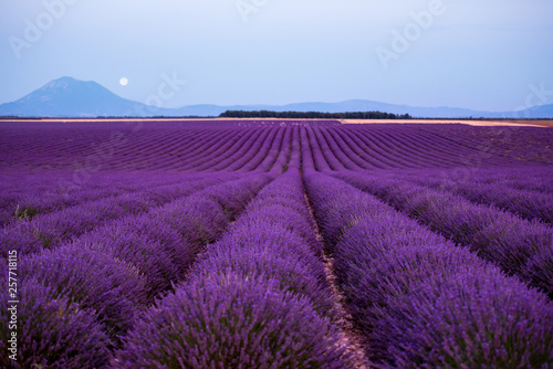 Poster Violet the moon above lavender field france