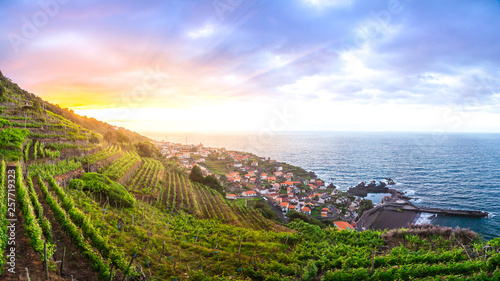Cuadros en Lienzo Wineyards of Madeira at sunset, above the municipality of Seixal