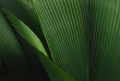 canvas print picture - Leafy green plant