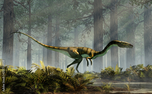 Fotografie, Obraz  Coelophysis, one of the earliest dinosaurs, was a carnivorous theropod