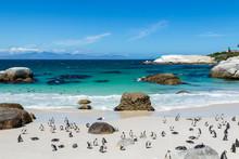 Strand Mit Pinguinen, Tropisch...