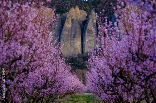 Arbres de pêche en fleurs, vue sur les rochers du village Les Mées, nommées pénitents Wallpaper Mural