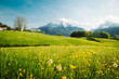 Leinwandbild Motiv Idyllic landscape in the Alps with blooming meadows in springtime
