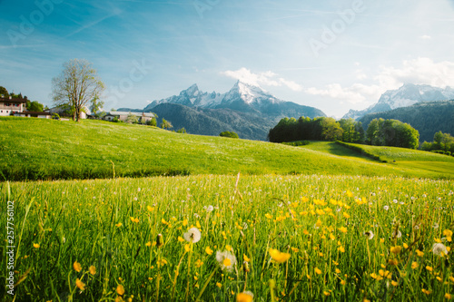 Poster Pool Idyllic landscape in the Alps with blooming meadows in springtime