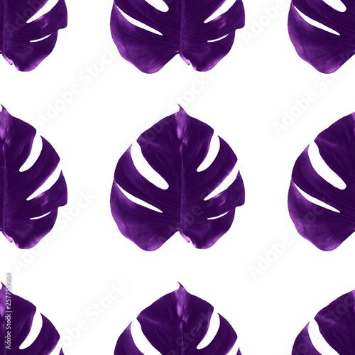 Monstera wydruku Jednolite wzór Liliowe liście monstera na białym tle Szablon projektu plakatów i banerów z miejsca na kopię