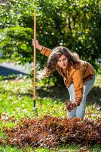 Young Woman Homeowner In Garden Yard Backyard Raking Collecting Of Dry Autumn Foliage Oak Leaves Reaching Down With Rake In Sunny Fall