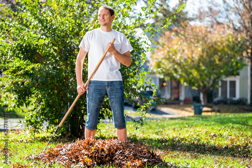 Fototapeta Young man homeowner in garden yard backyard raking collecting of dry autumn foli