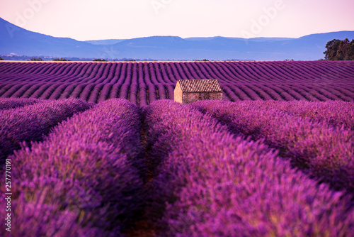 Poster Violet stone house at lavender field