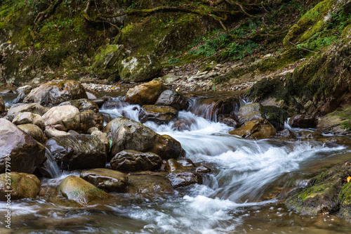 Printed kitchen splashbacks River Mountain stream with clear water in the boxwood forest, Krasnodar region, Russia
