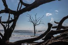Tree In The Water Boneyard Beach Bulls Island South Carolina