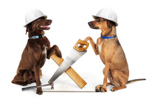 Funny Construction Dogs Buildi...