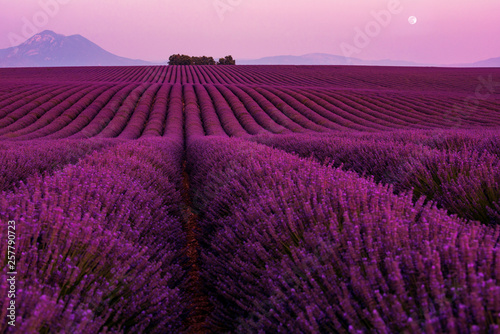 Poster Violet moon during colorful sunset at lavender field
