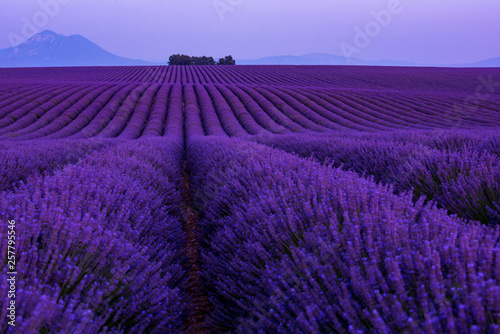 Fotobehang Violet colorful sunset at lavender field