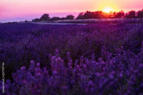Aluminium Prints Light pink colorful sunset at lavender field