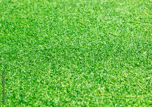 Foto op Plexiglas Groene Green lawn