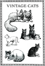 Set Of Vintage Engraving Cats