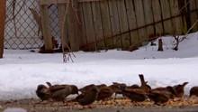 Backyard Bird Eating Frenzy - ...