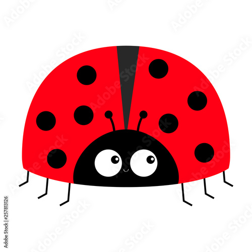 Lady bug ladybird insect icon print Fototapet