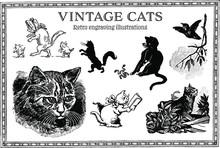 Set Of Retro Engraving Cats Illustrations