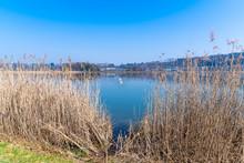 Bird Protection Lake At Klingnau In Switzerland