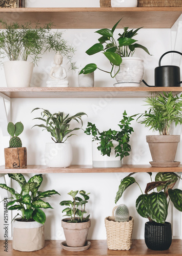 Stylish Wooden Shelves With Green Plants And Black Watering