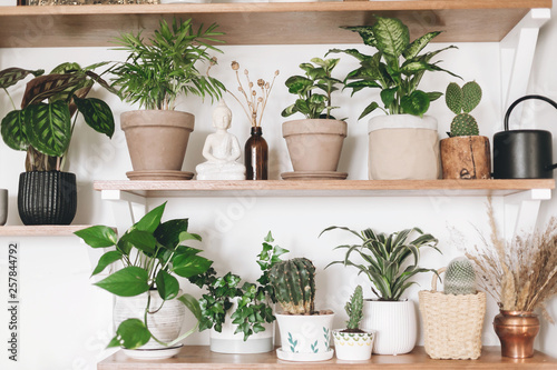 Photo  Stylish wooden shelves with green plants, black watering can, wildflowers