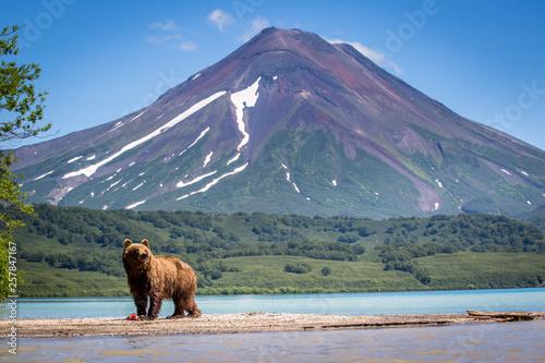 Photo  Kamchatka Bear Ruling the landscape