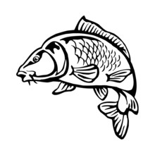 Carp Fish With Fish Scales Big Fish Black And White Clipart