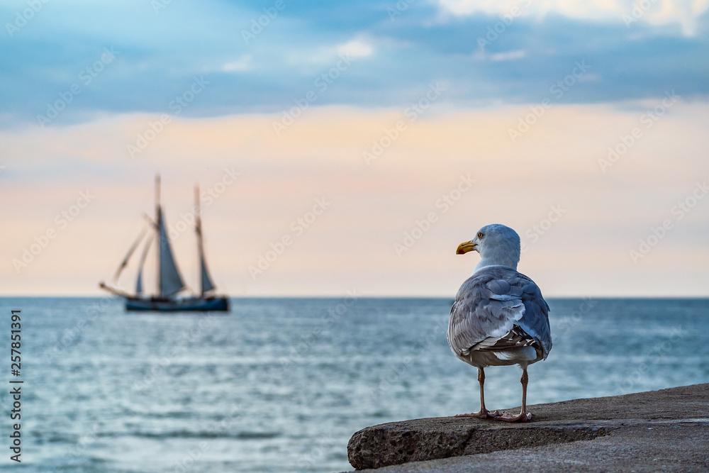 Fototapety, obrazy: Segelschiff und Möwe auf der Hanse Sail in Rostock