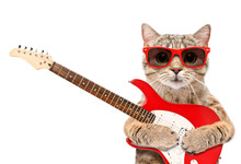 Cat In Sunglasses With Electri...